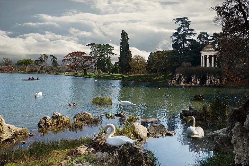 Version positive : Le lac des cygnes