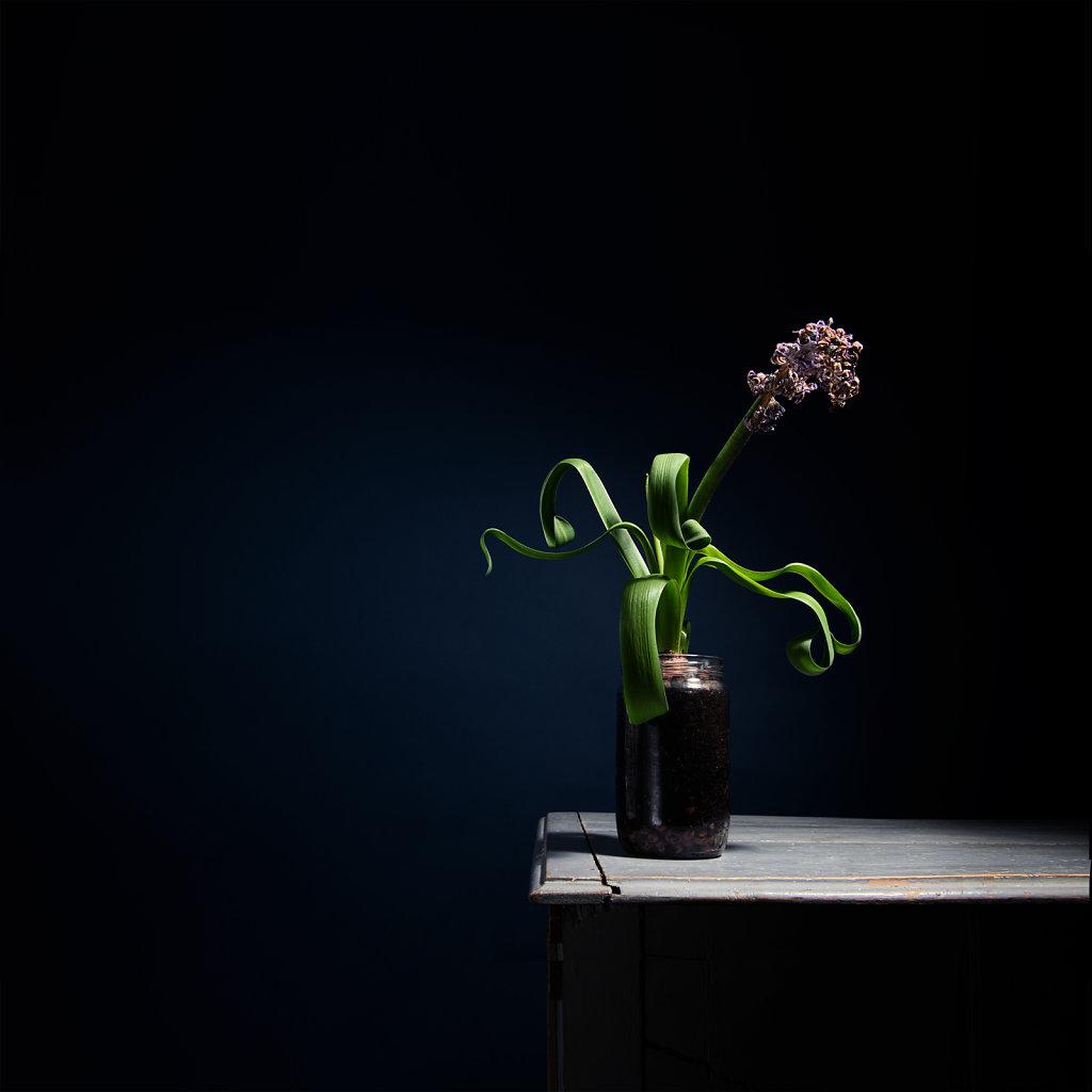 Food & Flower